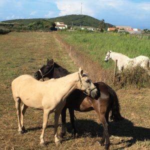 Passeios Equestres e em Charrete